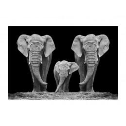 OBRAZ ELEPHANT FAMILY 120x80